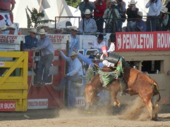Pendleton Round-up Rodeo : Bull riding