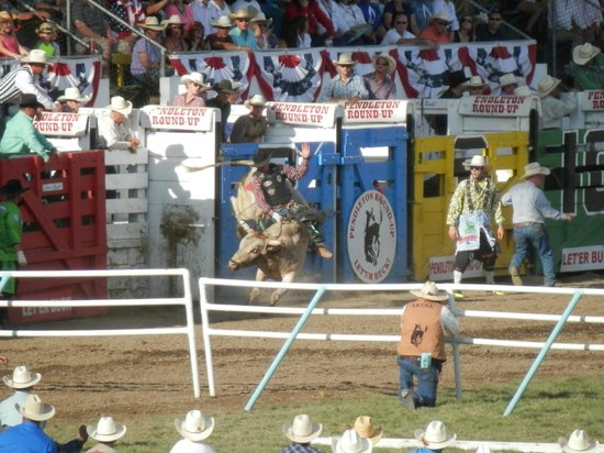Pendleton Round-up Rodeo : More bull riding