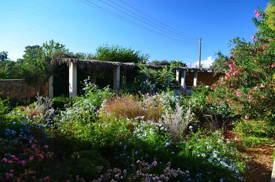 Metohi Kindelis: Kynthia's wildflower garden.