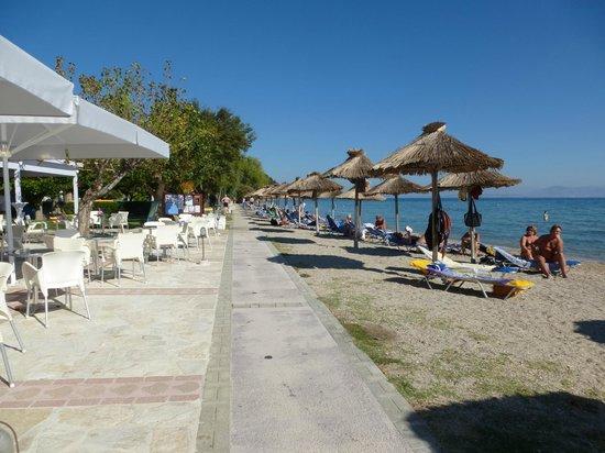 Delfinia Hotel : Strandzicht