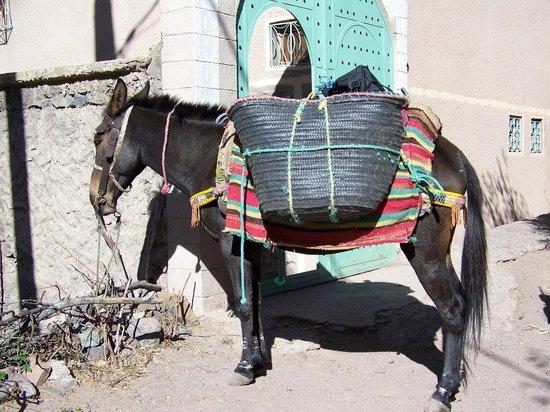 Maison D'hotes Dar Ait Souka: La mule de Sabir
