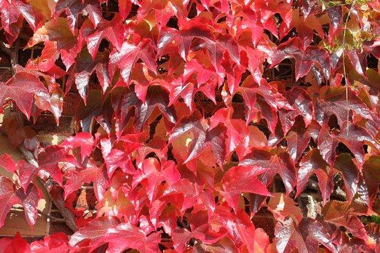 สวนปะติมากรรมยอร์คไชร์: Primo rosso d'autunno