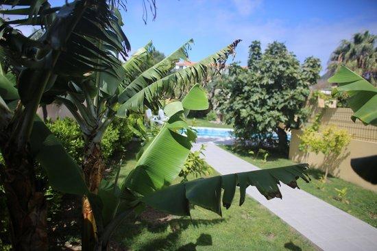 Casa do Velho Dragoeiro: view from the room over the garden