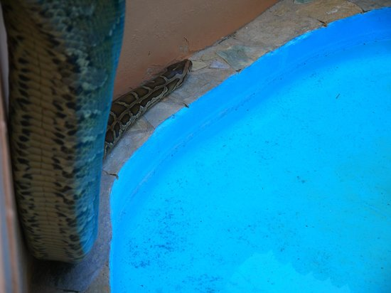 ... Aquarium & Reptile Rescue Centre: Snake at Aquaworld Aquarium, Crete