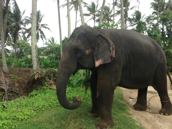South Point Villa : The lovely elephant