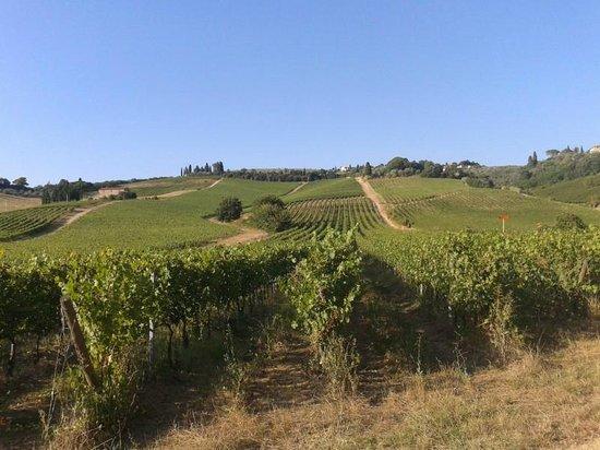 """Io Svolto - Day Tours & Bike Rentals: le """"dolci colline"""""""