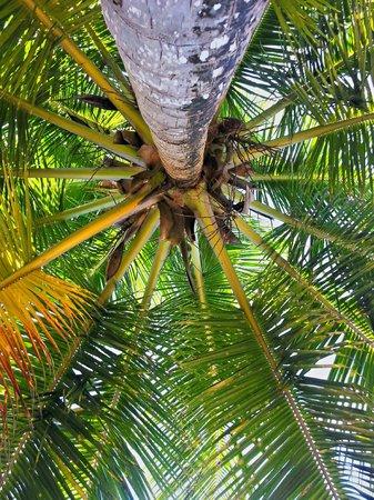 Tres Palmas Inn: Lying on the beach