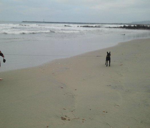 Ocean Beach Hotel: Our dog on the beach
