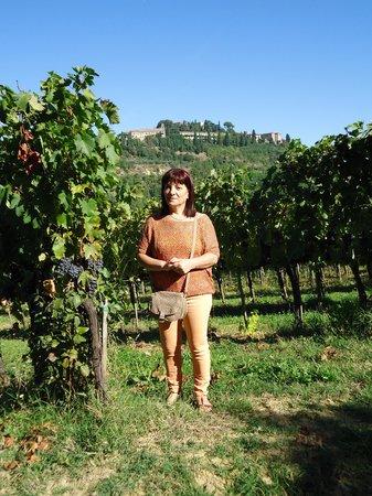 Agriturismo Nobile: Farms. Nobile Montepulciano - The vineyard