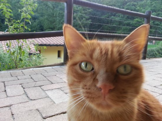 Lebbiano Residence: Jonah, the friendly resident cat