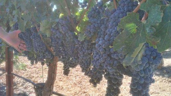 Simi Winery: Sonoma Cabernet
