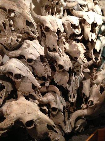 Head-Smashed-In Buffalo Jump: Buffalo skulls