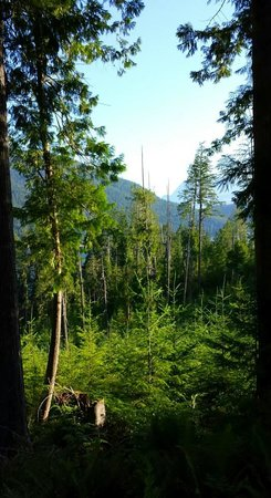 Skookumchuck Narrows Provincial Park: The forest