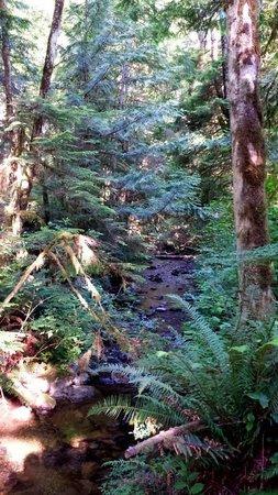 Skookumchuck Narrows Provincial Park: The forest