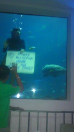 Pacific Beach Hotel Waikiki Oceanarium Restaurant Merky Water