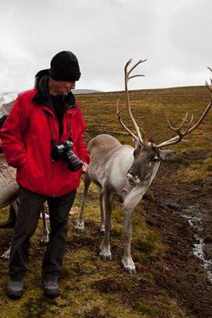 Cairngorm Reindeer Herd: You lokking at me?
