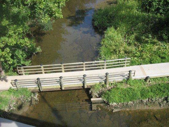 Theodore Roosevelt Island Park : TR Island: Swamp Trail Bridge