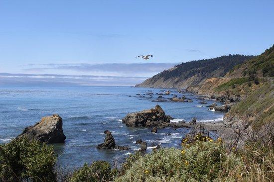 Emerald Dolphin Inn: coast