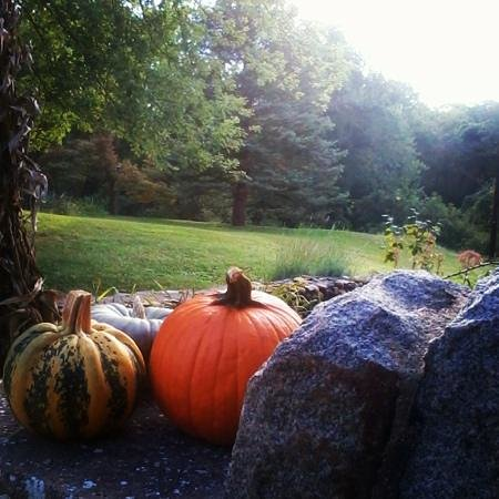 pumpkins at the front of Laurel Lodge .