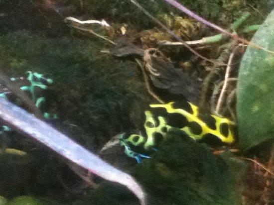 Texas State Aquarium : Frogs on exhibit