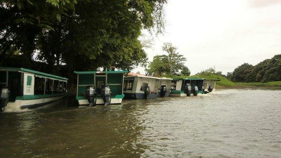 Tortuguero Canal: embarcadero del hotel