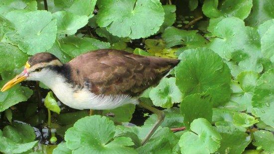 Tortuguero Canal: fauna de la zona