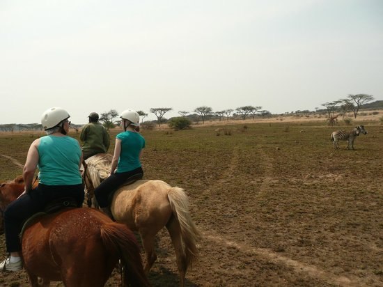 Spioenkop Nature Reserve : One of many species viewed from the horseback ride