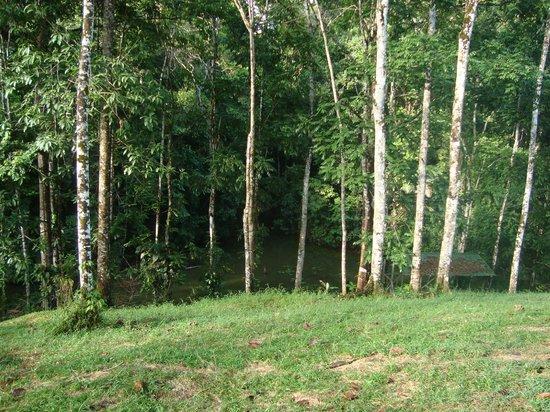 Laguna del Lagarto Lodge: Zonas verdes aledañas a la habitación