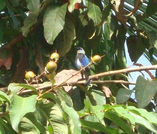 Laguna del Lagarto Lodge : Uno de los tantos pájaros que se observan