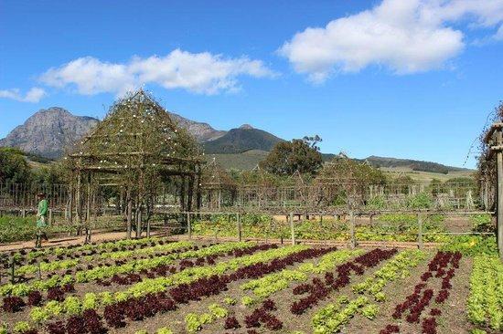 Babylonstoren: An edible garden