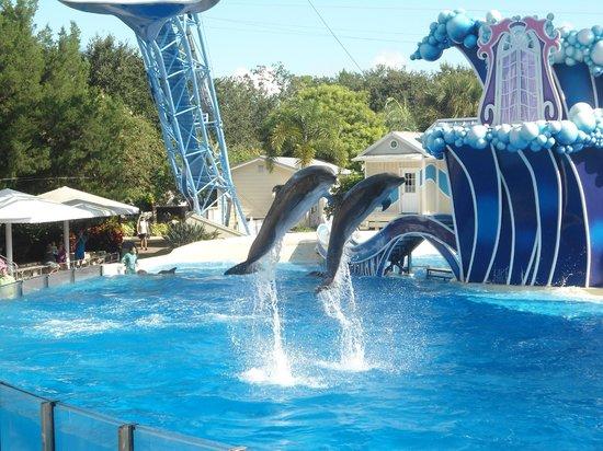 ซีเวิลด์ ออร์แลนโด: Espectáculo de delfines