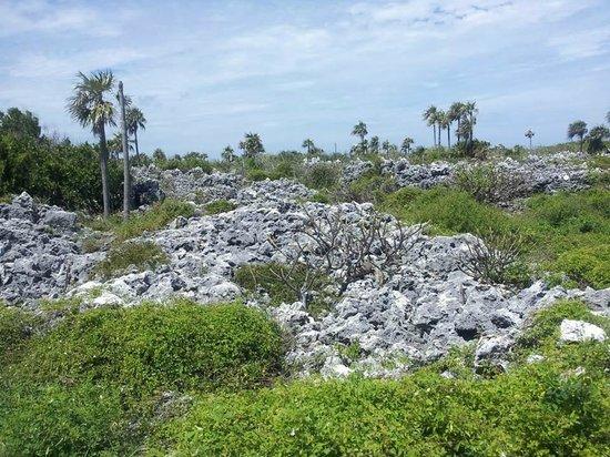 Carib Sands Beach Resort: View from hiking trail