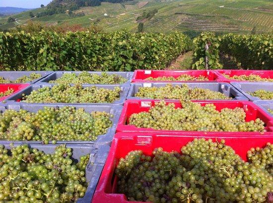 Hotel Gambetta : Grape picking Chateau-Chalon