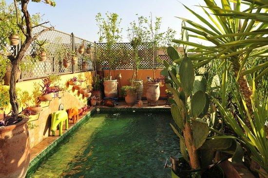 Riad CharCam : Un bien sympathique petite piscine