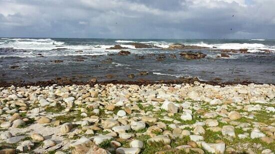 Cape of Good Hope: la spiaggia del capo di buona speranza