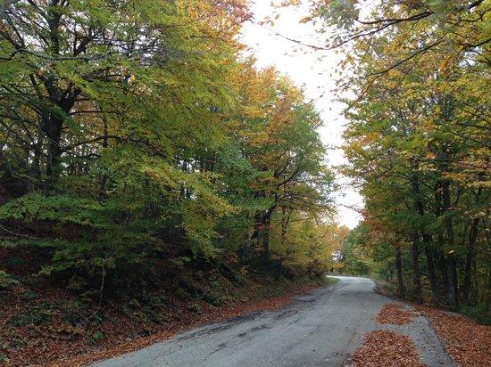 Prato Selva Freeride Paradise: Strada del Parco per Prato Selva