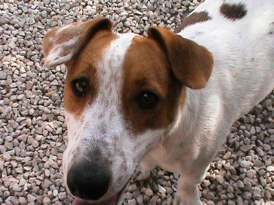 Dar Maris Maison d'hotes: Jack le chien du Dar Maris !