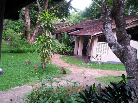 Sigiriya Village Hotel: Rooms being visited by monkeys