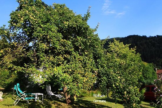 Schwarzwaldhotel Garni Wolfach : Garden