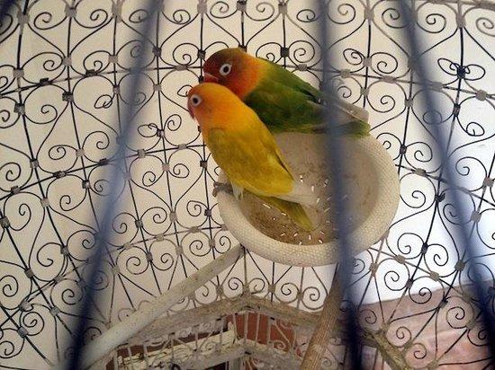 Riad Hayati: Lovely parrots