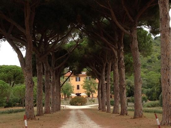 Villa Boldrini : viale di ingresso
