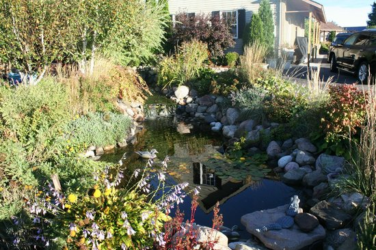 Serenity Ranch Bed and Breakfast : Koi Pond