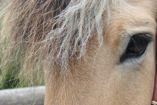 Savalen hestesenter: Fjording