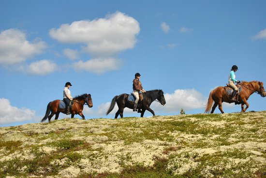 Savalen hestesenter: Lang, lang rekke...