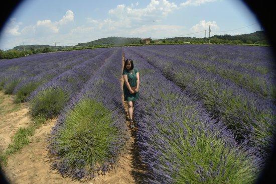 Ventoux Decouvertes : avignon lavender field