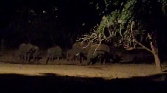 Ndololo Camp: elefanti fuori dalla tenda