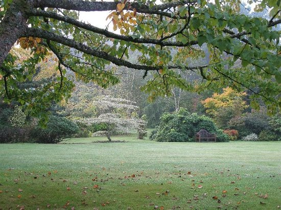 Hartwood House: Croquet lawn on a misty morn