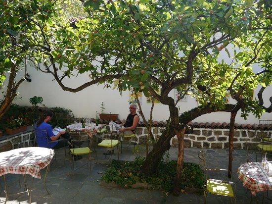 Hostel Old Plovdiv: the garden