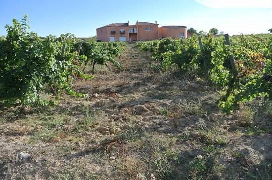 O'Vineyards Bed & Breakfast - Carcassonne : Domaine O'Vineyards