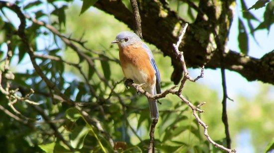 Lake Thunderbird State Park: Bluebird